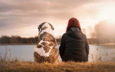 Animales de compañía en los procesos de familia